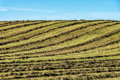Hay field Royalty Free Stock Images