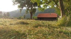 Hay field Simon, Bran, Romania  Royalty Free Stock Image