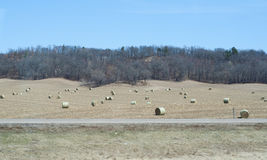 Hay in the field Royalty Free Stock Photos