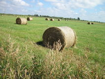 Hay in field Stock Photos