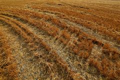 Hay Field Stubble Royalty Free Stock Photo