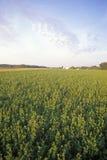 Hay field in summer, IN Stock Photo