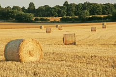 Hay Field with Trees Royalty Free Stock Photos