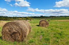 Hay on field under blue sky Royalty Free Stock Image