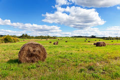 Hay on field under blue sky Royalty Free Stock Photos