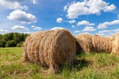 Hay on field under blue sky Stock Photo