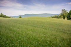 Hay Field vert Photo stock