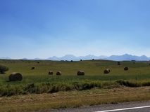 Hay fields. Fresh cut hay in Alberta Canada with the Canadian Rockies in view stock photo