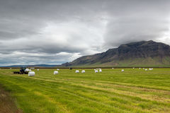 Hay fields Stock Image