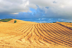 Hay in the fields from Portugal Royalty Free Stock Images