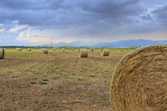 Hay fields Stock Photography