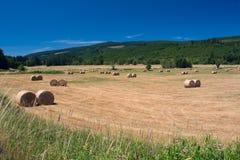Hay Fields und neuer Rolls Lizenzfreie Stockfotos