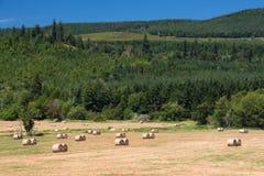 Hay Fields und neuer Rolls Stockfoto