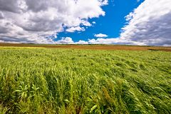 Hay fields under cloudy sky view. Agricultural landscape of Prigorje region of Croatia stock image