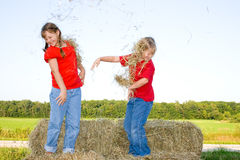 Hay fight. Royalty Free Stock Photography