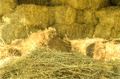 Hay. Folded at the stables Stock Photos