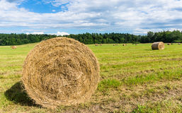 Hay, fresh mowed and packaged Stock Photo