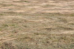 Hay, freshly cut grass Stock Photos