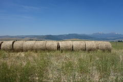 Hay gathered into neat rolls at a farm in idaho Stock Photo