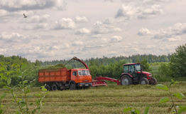 Hay gathering. Agriculture: hay gathering in the Luga area Royalty Free Stock Photography