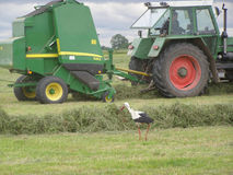Hay gathering 5. The collecting receiver of hay, the agricultural unit. Hay laying by wolves. In the foreground the white stork perambulates Royalty Free Stock Photography
