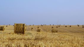 Hay of Golden color, against a blue sky. Wheat field in autumn after harvest. 4K stock video
