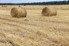 Hay and grass Stock Images