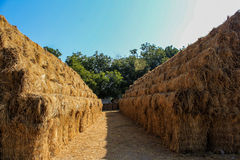 The hay Royalty Free Stock Image