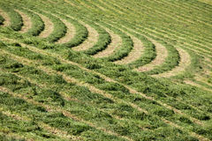 Hay grass pattern Royalty Free Stock Images