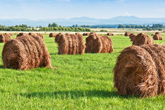 Hay on the grass Stock Image