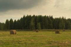 Hay, Grassland, Pasture, Field stock photography