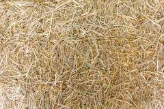 Hay on ground. Stock Image