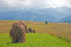 Hay harvest royalty free stock photography