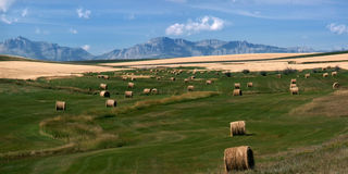 Hay Harvest. Rolled bales of hay on the high prairie of wyoming Royalty Free Stock Photo