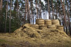 Hay after harvest. Royalty Free Stock Photo