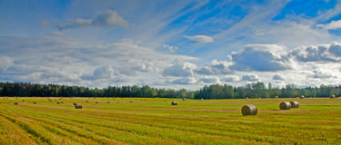 Hay harvest Royalty Free Stock Photo