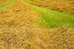 Hay harvest Stock Images