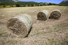 Hay harvest in italy Stock Images