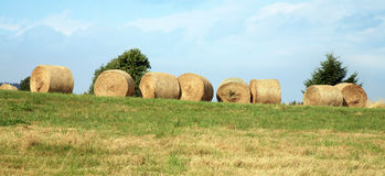 Hay harvest on meadow Royalty Free Stock Photography