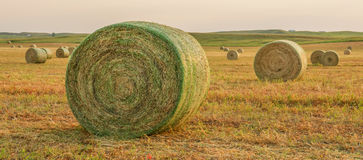 Hay harvest North Dakota. Just off Route 83 north of Bismarck royalty free stock photography