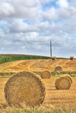 Hay harvest roll Stock Image