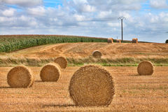 Hay harvest time Royalty Free Stock Photography