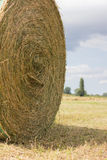 Hay Harvest. The harvest of hay to get to the milk production Royalty Free Stock Photography