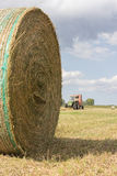 Hay Harvest. The harvest of hay to get to the milk production Stock Photography