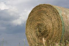 Hay Harvest. The harvest of hay to get to the milk production Royalty Free Stock Photo