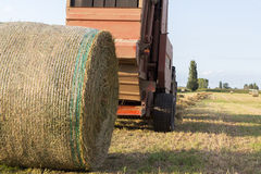 Hay Harvest. The harvest of hay to get to the milk production Royalty Free Stock Image