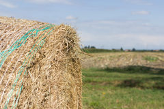 Hay Harvest. The harvest of hay to get to the milk productionn Stock Photography