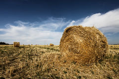 Hay harvested roll Stock Image