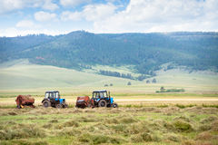 Hay harvesting. Tractors are harvesting dried up hay in the field Stock Image