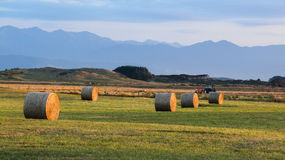 Hay Harvesting Royalty Free Stock Photo